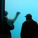 ours-polaire-casse-vitre