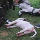 pompiers-sauvent-deux-chiens