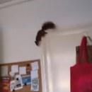 miniature pour Un écureuil fout le bordel dans la cuisine et s'enfuit