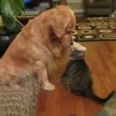 chat-vampire-attaque-chien
