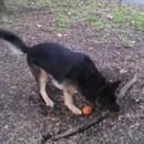 miniature pour Ce chien veut sa branche d'arbre