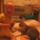 miniature pour Un chat qui mord et griffe un bébé