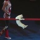des-chats-au-cirque