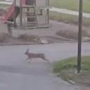lapin-croise-chien