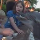 miniature pour Un dauphin mord une petite fille
