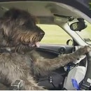 miniature pour Une auto école pour les chiens