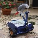 birdbuggy-perroquet-conduit