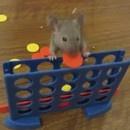 miniature pour Des souris intelligentes qui font des tours