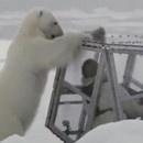 miniature pour Rencontre avec un ours polaire