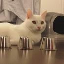 miniature pour Un chat et son premier bonneteau