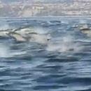miniature pour Une fuite de dauphins