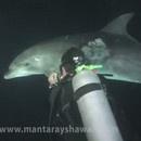 dauphin-sauvage-cherche-aide-aupres-plongeur
