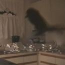 aluminium-contre-chat-cuisine