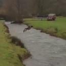 miniature pour Un chien qui saute au dessus d'une rivière