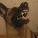 miniature pour Un chien qui change d'attitude en 1 seconde