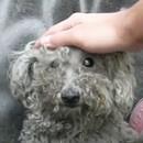 miniature pour Un chien aveugle sauvé de la rue
