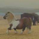 la-danse-du-poney