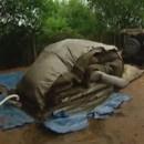 miniature pour Une tente en béton