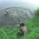 photographe-mordre-crocodile