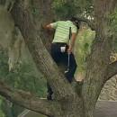 sergio-garcia-joue-golf-sur-arbre