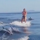 fille-wakeboard-dauphins