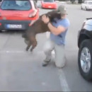 chien-content-revoir-maitre