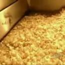 miniature pour Comment sont faites les chips ?