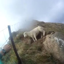 sauvetage-mouton-fail