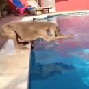 chien-frisbee-piscine