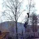 russie-ours-essaie-manger-homme-arbre