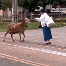 mouton-terrorise-gens-rue