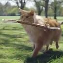 miniature pour Un chat qui se prend pour un chien