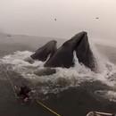 baleine-failli-avaler-nageur