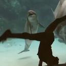 fille-fait-rire-dauphin