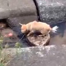 chien-joue-seul-balle-riviere