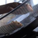 miniature pour Un hamster conduit un camion
