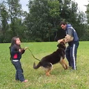 fille-5-ans-protegee-berger-allemand