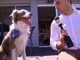Un chien vole la bonnette d'un microphone