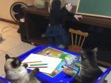 Une petite fille donne des cours de dessins à ses chats